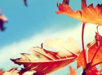 Falling Golden Leaves Android Wallpaper