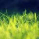 Grass Wallpaper for Android
