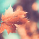 Leaf bokeh Style Wallpaper for Android