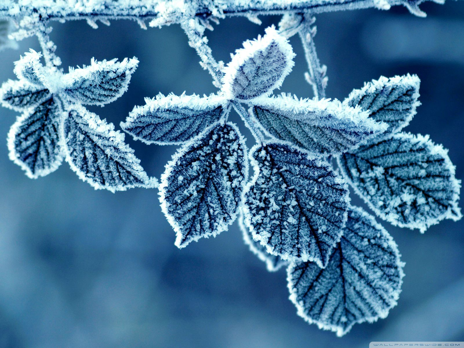 android winter wallpapers collection a· winter wallpaper
