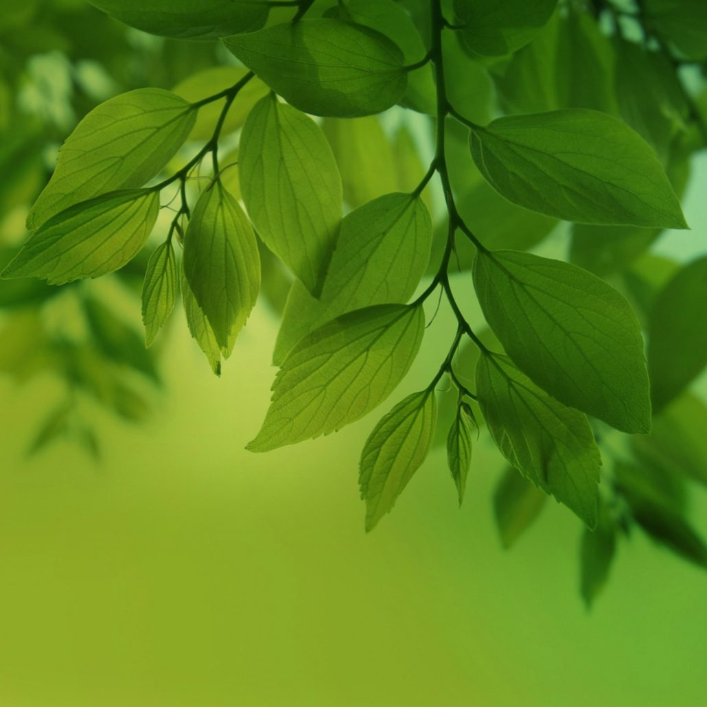 Galaxy-Note-Pro-12-2-Green-leaves-Wallpaper