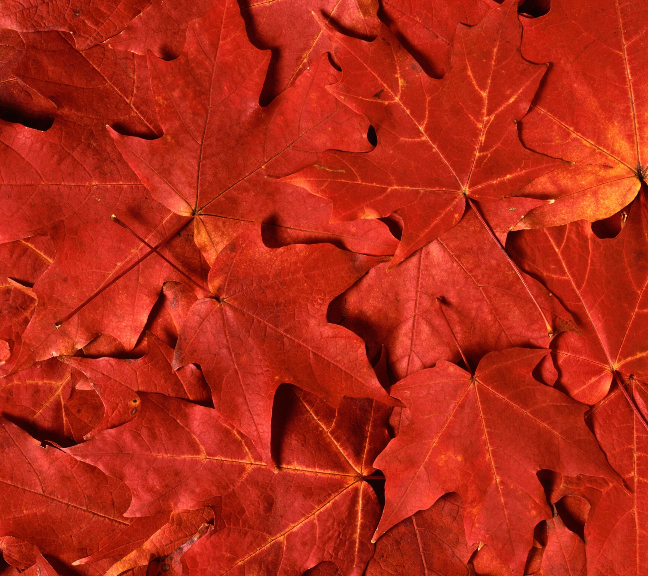 leaves-xperia-z2-wallpaper